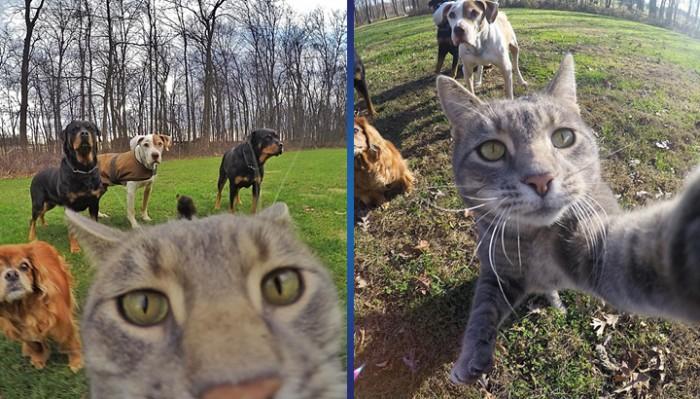Кот, который в искусстве сэлфи даст фору любому из нас