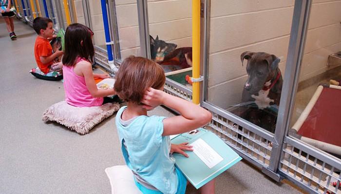 Эти дети сделали для несчастных собак то, что не смог сделать никто другой