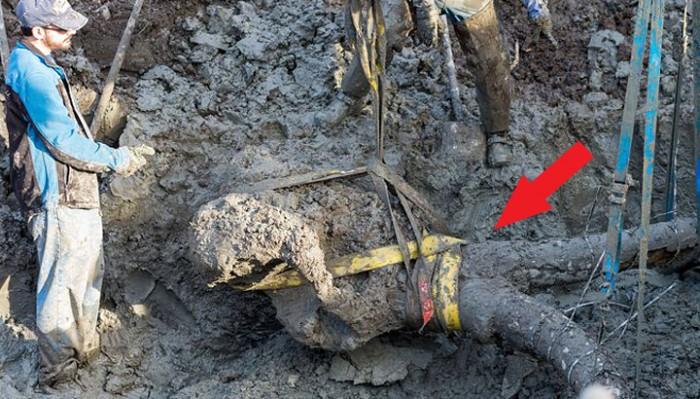 Он копал канализацию, но внезапная находка ошарашила даже ученых