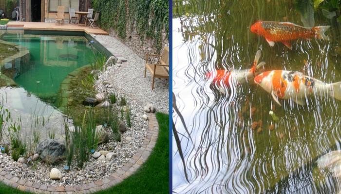 Самые популярные рыбы для декоративных водоемов или в нашем пруду живут карпы и караси
