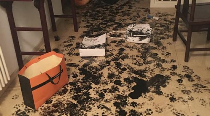 Хозяева совершили ОГРОМНУЮ ошибку, оставив хаски одного дома на целых 3 часа!