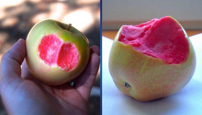 Она откусила яблоко и на мгновение подумала, что сходит с ума