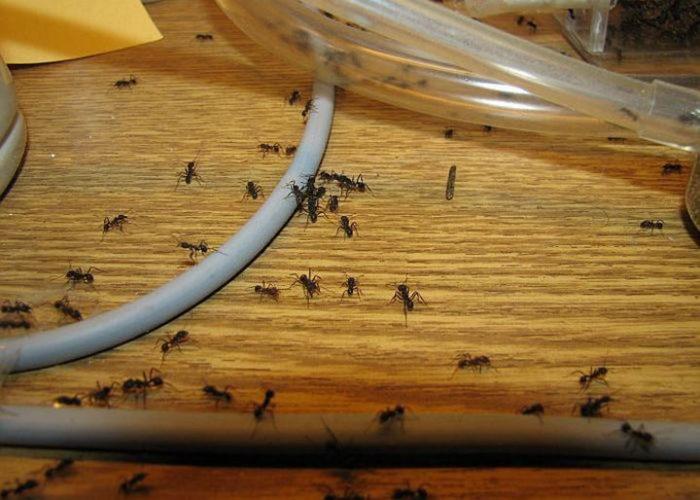 Она обработала этим дверной проем и муравьи навсегда сбежали из ее дома!