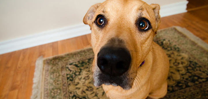 dog wee pads reviews