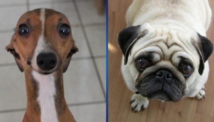 10 особо убедительных собак-попрошак! Неужели вы не дали бы вкусняшку песику с ТАКИМ взглядом?