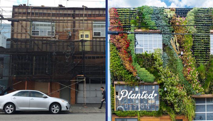 Вертикальный зеленый сад – такого вы еще точно не видели! (10 фото)