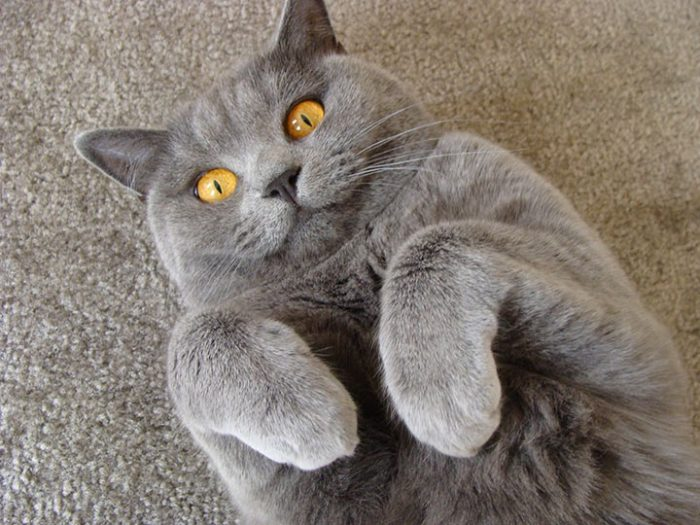 Все кошки и коты делают ЭТО! Хотите знать – почему?
