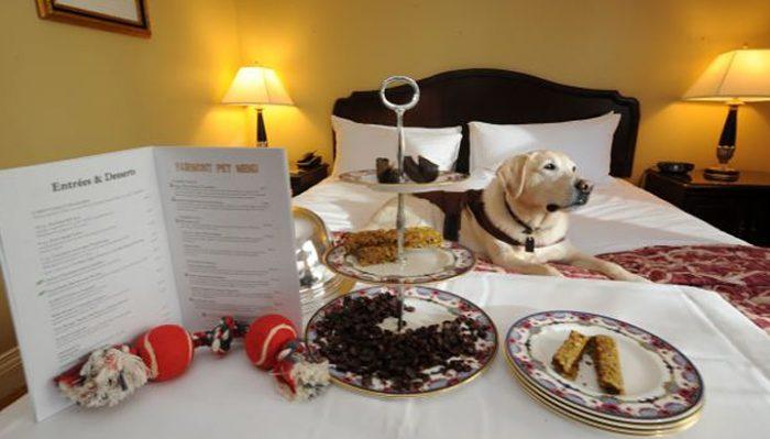 Он спросил, может ли взять собаку в гостиничный номер. Ответ отельера сразил наповал!