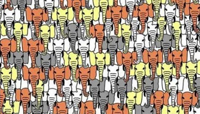 Найдите трех панд за минуту, чтобы доказать, что ваш IQ выше 140!