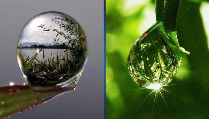 11 фотографий росы в макросъемке или Что может быть красивее самой природы?
