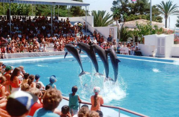 Обратная Сторона Шоу С Дельфинами, Которую Нужно Знать Всем!