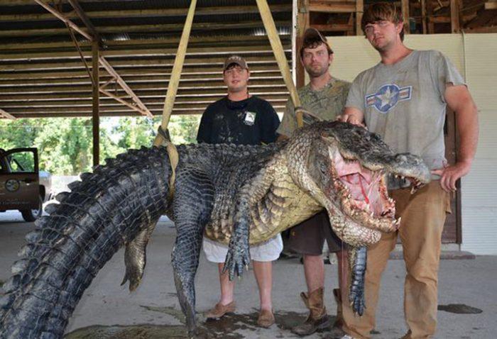 Они поймали гигантского крокодила, но больше всего поражает то, что было внутри него.…