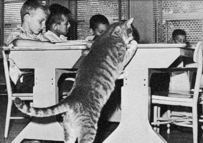 В свое время история этого кота поразила весь мир!