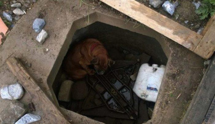 Девочка спасла собаку от смерти в бетонной яме. Самое ужасное, что животное оказалось в ловушке не случайно…