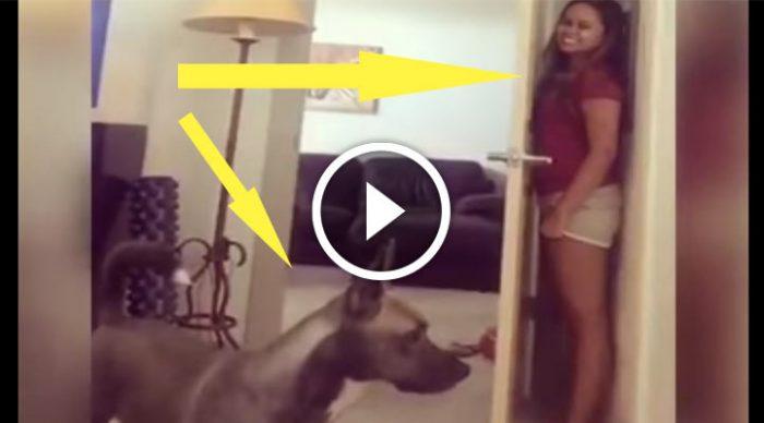 Внимание! Найден самый глупый пес в мире!