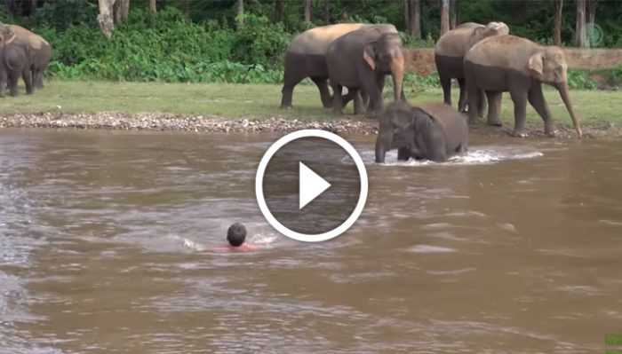 Мужчина барахтался в бурном потоке. И вдруг маленький слоненок отделился от стада и бросился в воду…