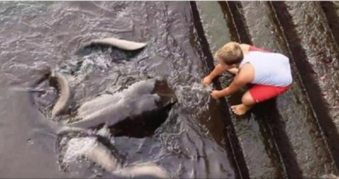 Этот мальчик решил покормить морского обитателя. Ты даже не догадываешься, кто его новый друг!