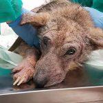 Эти фото спасенной собаки показали всему миру на какие чудеса способна любовь