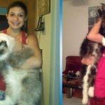 6 самых больших пород котов, в которых невозможно не влюбиться