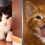 40 котят, которые поднимут настроение и развеют любую тоску