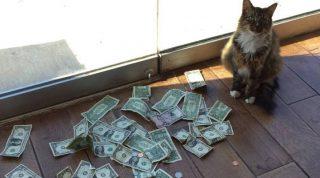 Сотрудники фирмы не могли понять, откуда их кот таскает наличку