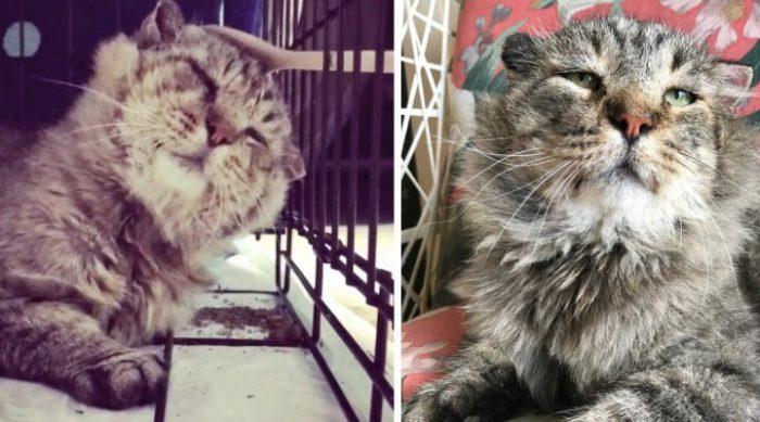 «Не покидай меня!» — Она гладила ложкой неприступного кота-манула, и он таял на её глазах
