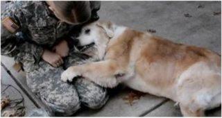 Пожилая собака не может перестать плакать, когда видит свою хозяйку после 3 трех месяцев разлуки