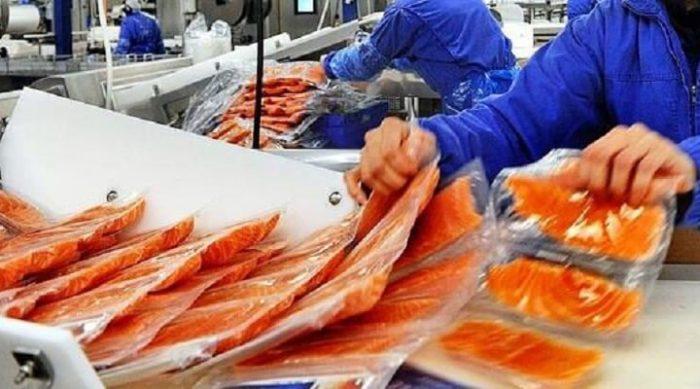 Рыба массового поражения! Вся правда о норвежском лососе