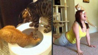 20 доказательств того, что котики — это милые и пушистые сволочи