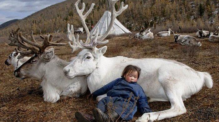 Затерянное племя цаатанов: удивительный образ жизни монгольских оленеводов