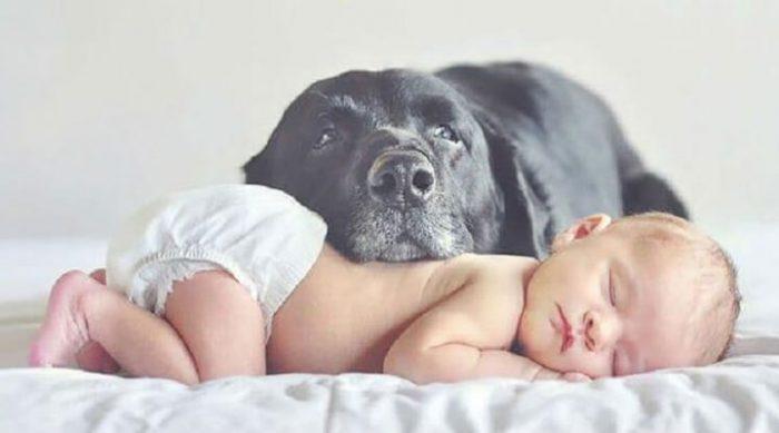 22 большие собаки, которые заботятся о маленьких детках