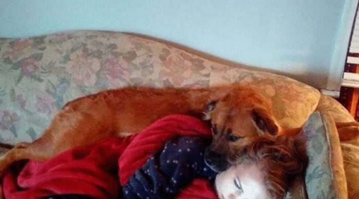 Фотографии, доказывающие что собаки — последние Ангелы на Земле