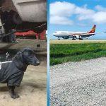 Собачья работа: 20 красавчиков при исполнении