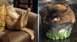 Эти коты познали Дзэн. Рекомендуем поучиться у них.