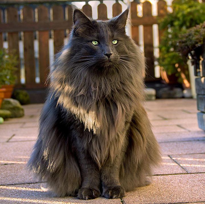 Картинки с красивые кошки в мире