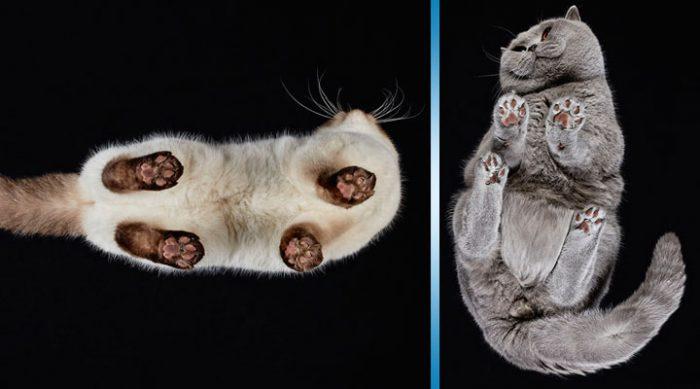 25 фото котов на стеклянном столе, мимо которых просто невозможно пройти