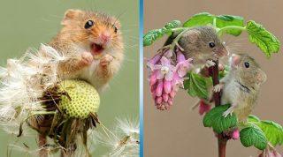 Фото самой милой мыши в мире, которые подарят вам заряд позитива на целый день