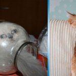 30 самых смешных котов